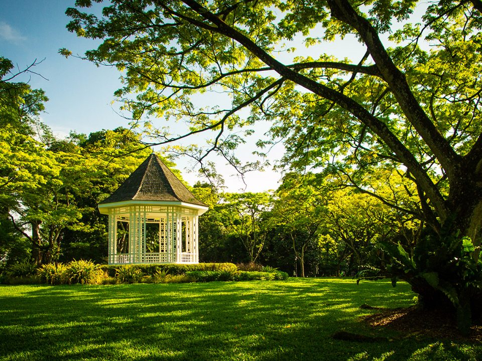 Botanic Gardens Trees